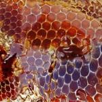 Боремся с лишними сантиметрами с помощью обертывания с медом. Лучшие рецепты