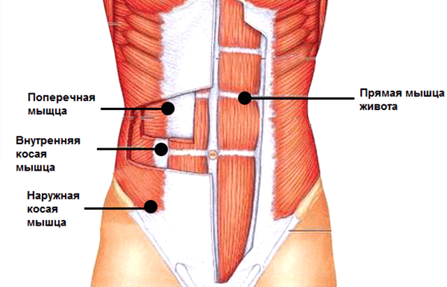 abmuscles