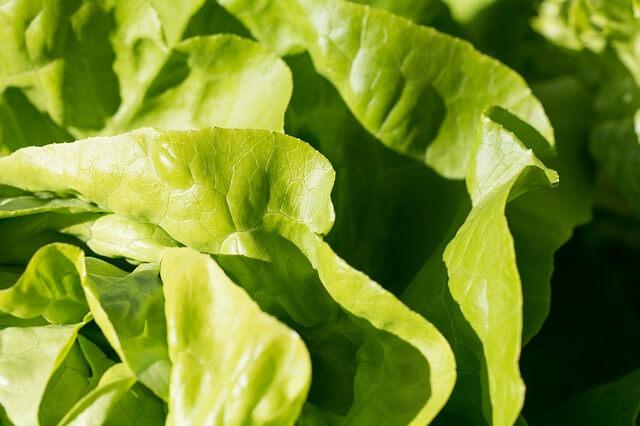 salad-1740235_640