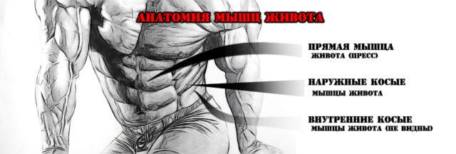 косые мышцы упражнения