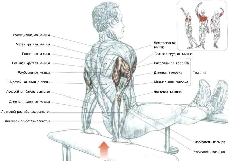Тренировки чтобы накачать мышцы в домашних условиях
