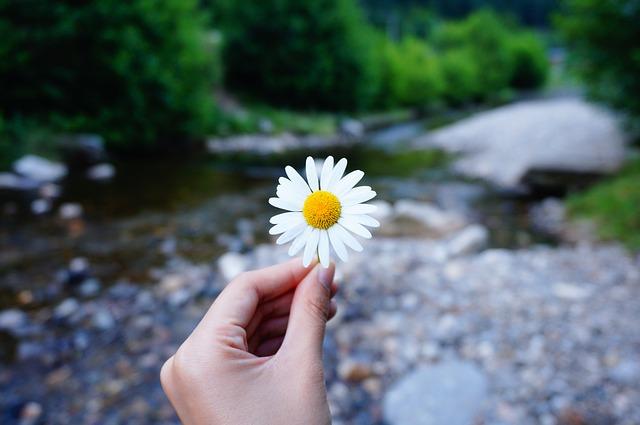 flower-2222058_640