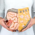 Понятие висцеральный жир и его норма в организме