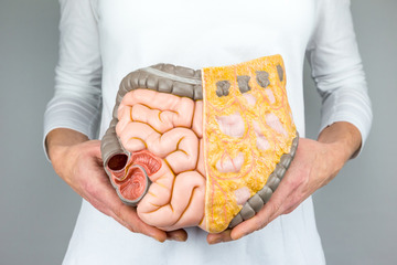 Висцеральный жир — что это такое, норма у женщин и мужчин: Как избавиться от висцерального жира в домашних условиях