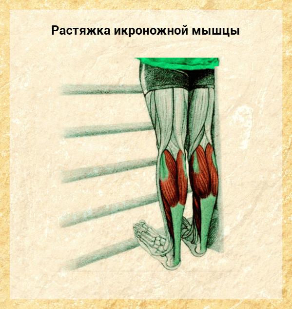 rastyazhka-ikronozhnoj-myshtsy