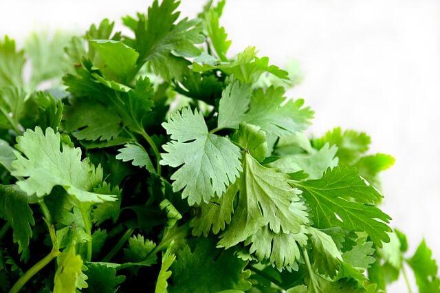 Травы улучшающие обмен веществ и способствующие похудению: вы должны их знать