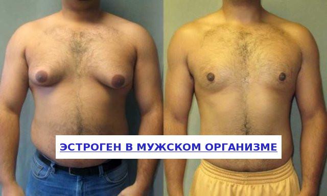 Функции и коррекция эстрогена в мужском организме