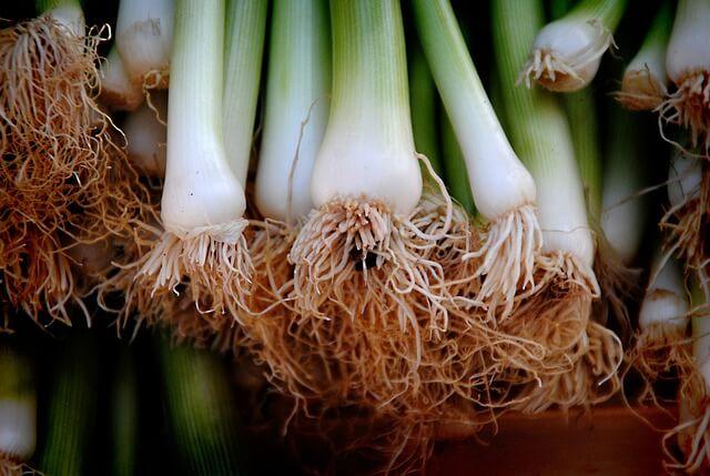 Что за чудо – лук-порей: польза и вред необычного овоща