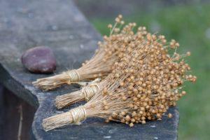 Ферменты льняного семени улучшают обмен веществ и защищают от ожирения
