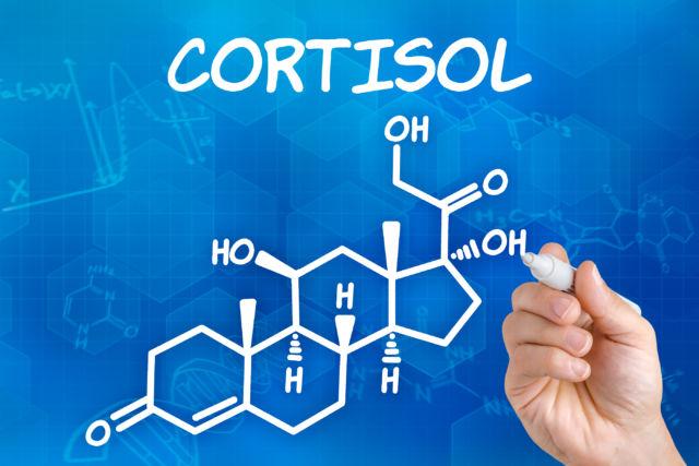 Гормон кортизол за что отвечает и чем полезен?