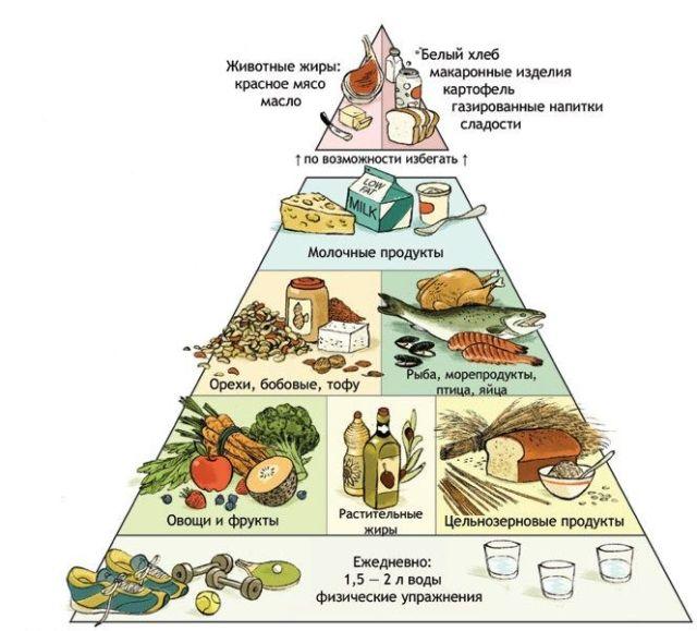 Граврардская пищевая пирамида