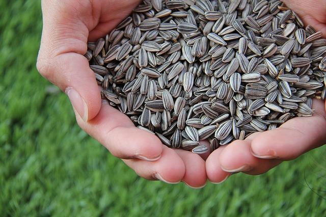 Можно ли потолстеть от тыквенных семечек